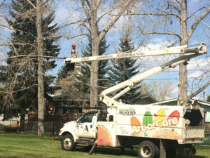Commercial Tree Care in Calgary, Edmonton, Kelowna, Vernon & All Western Canada